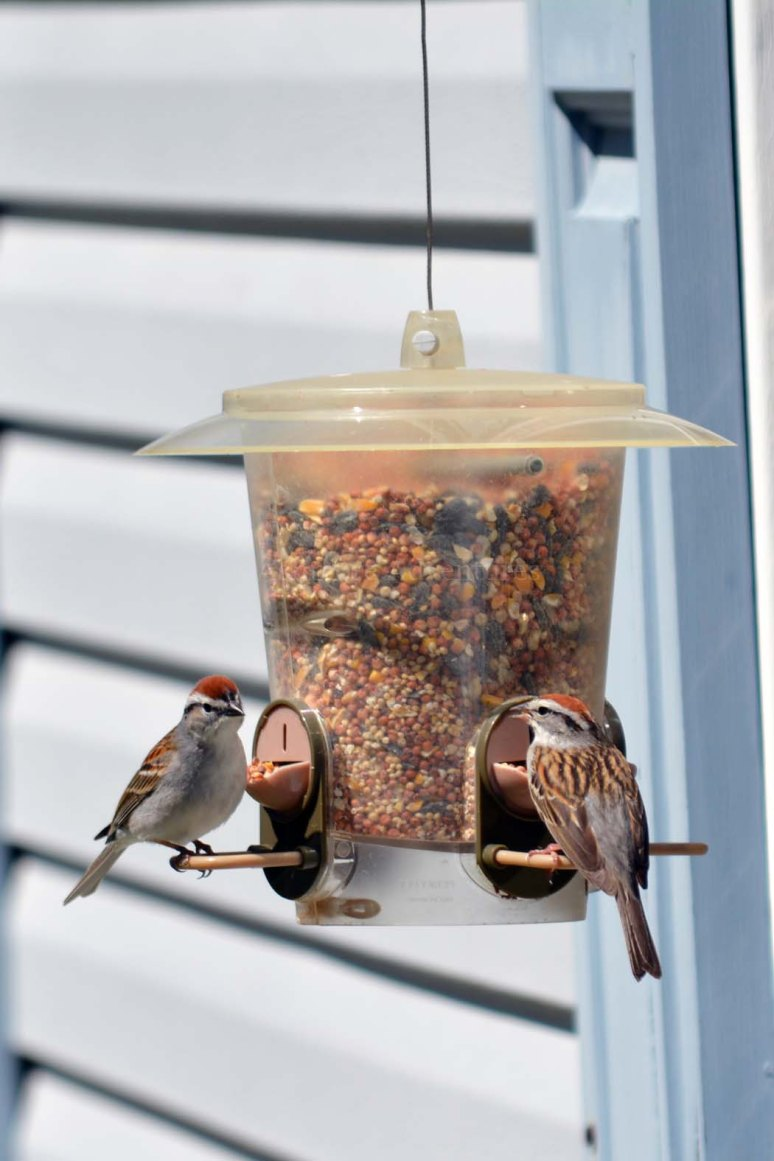 5/10/13 Birds on feeder this afternoon.