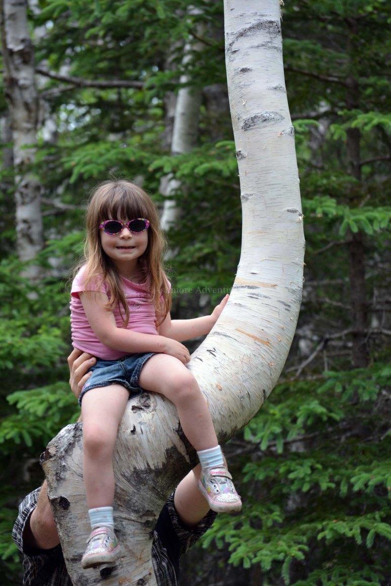 6/16/13 Tree climber