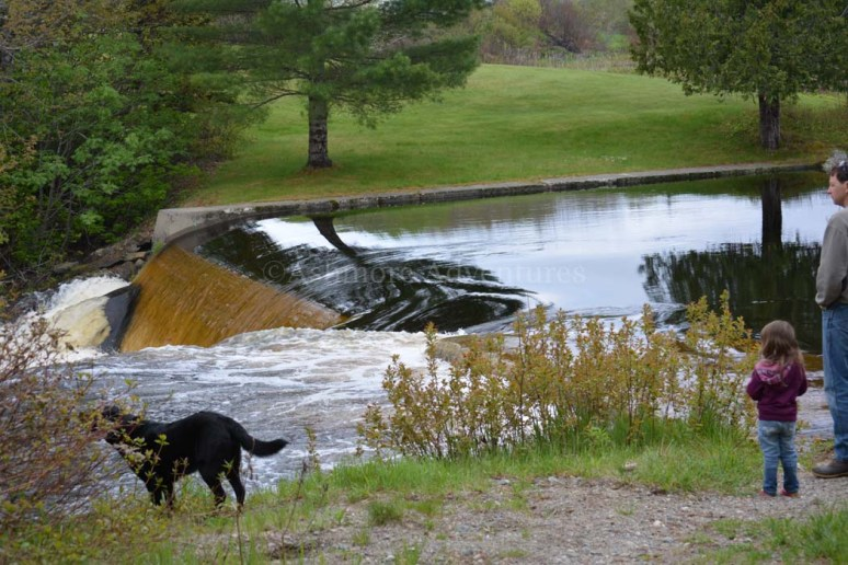 5/26/13 Lots of water over the dam.
