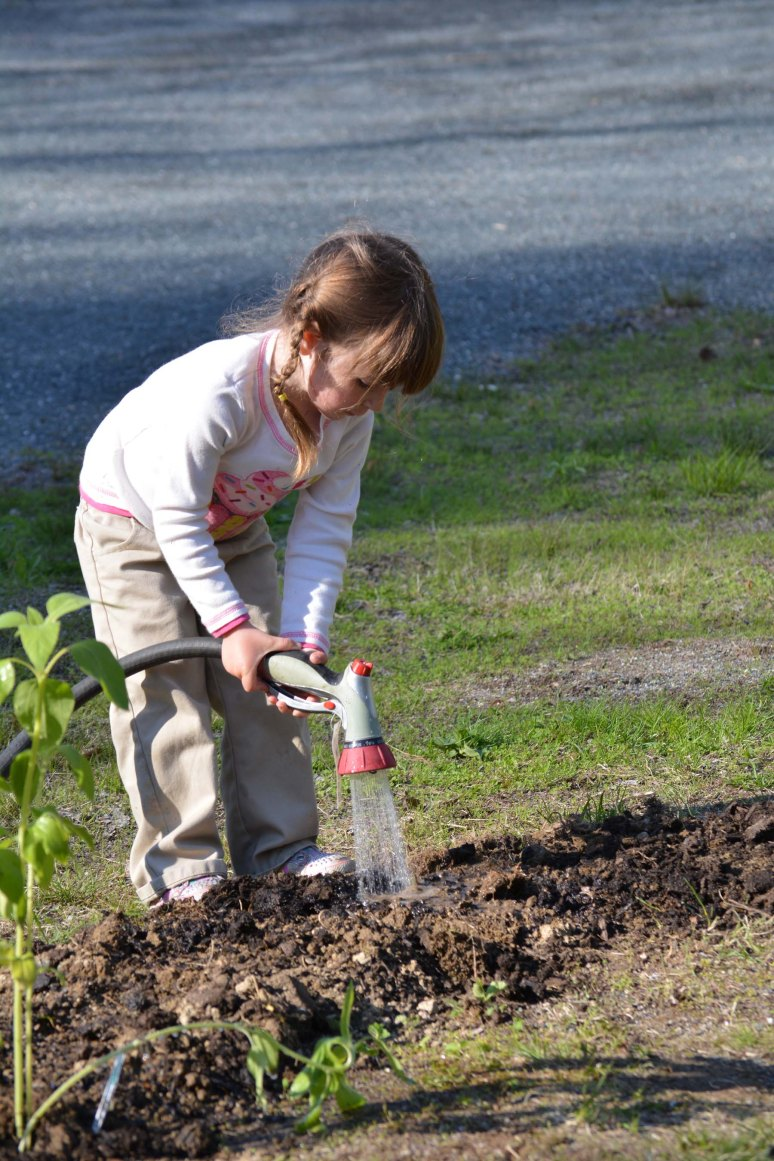 5/16/13 Watering her newly planted sunflower seeds.
