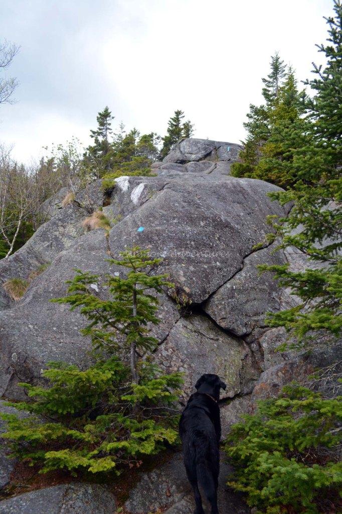 5-25-14 Tumbledown Mtn hike (46)