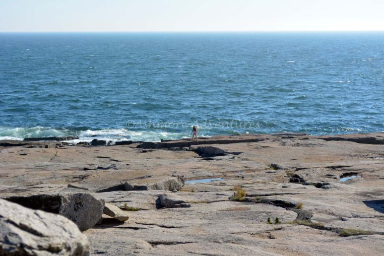 9/28/14 Running away from us. Schoodic Point, Acadia National Park.
